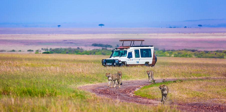 Tips för dig som planerar en safariresa